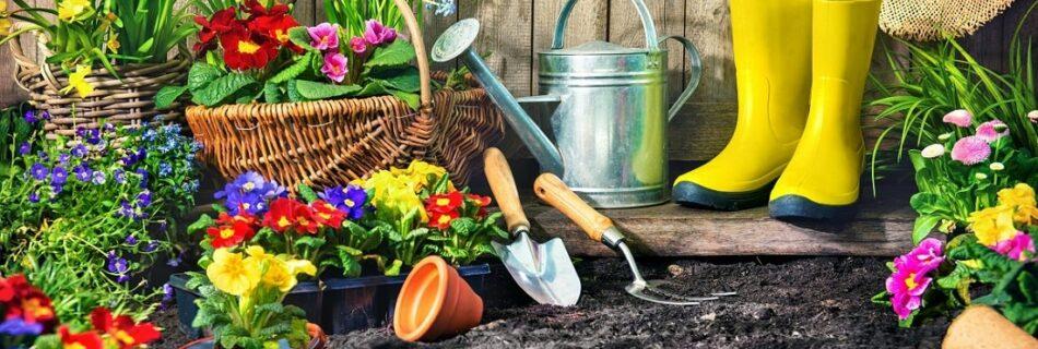 ขั้นตอน การออก แบบสวน