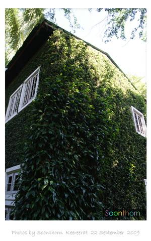 l tree wall 7