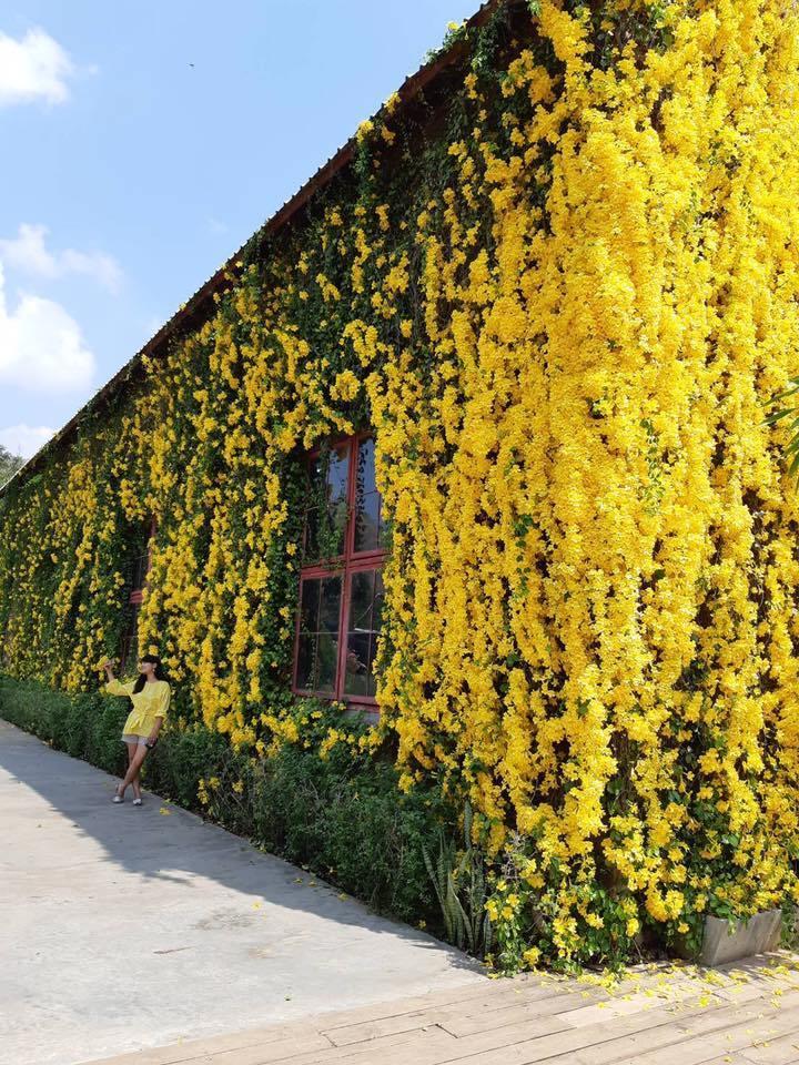 l tree wall 6