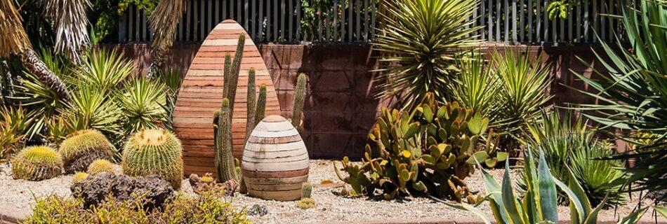 Advice on arranging a cactus garden